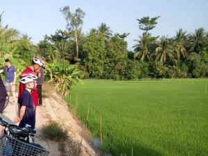 ricefield_bike_2.jpg